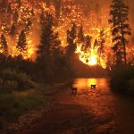 Respiramos com dificuldade – Entenda sobre as queimadas da Amazônia